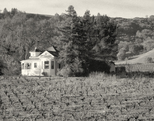 Seghesio Family Vineyards in the past